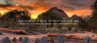 Backyard Pictures Desert Botanical Garden