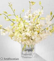 white dendrobium orchids smithsonian white whispers dendrobium orchid bouquet beaudry flowers