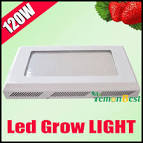Wholesale 120W UFO LED Plant Grow Light Hydroponic Red Blue 8:1 ...