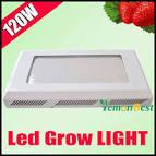 Wholesale 120W UFO LED Plant Grow Light Hydroponic Red Blue 8:1 ...