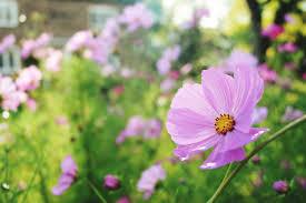 Photo Flower Garden by 12 Best Annual Flowers For Full Sun