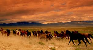 mustang horse take action american wild horse campaign