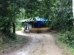platform tent platform tent tiwai island wildlife sanctuary