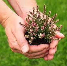 Landscape Nurseries Near Me by Best 25 Plant Nursery Ideas On Pinterest Garden Shop Nursery