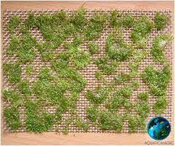 how to secure moss into aquarium tank diy to create a wall or