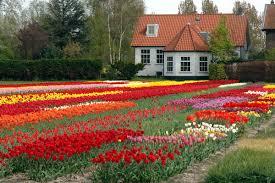 flower garden in amsterdam april 2005