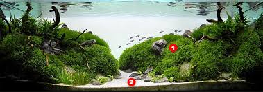 Aquascape Design Aquascaping For Beginners The Planted Tank Forum