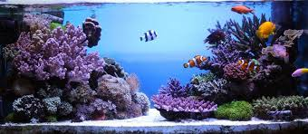 Aquascape Reef Photo