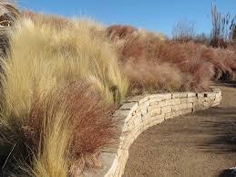 181 best grasses images on ornamental grasses garden
