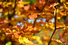 brown leaves during daytime free stock photo