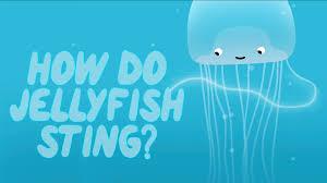 how does a jellyfish sting neosha s kashef youtube