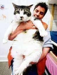 """Gabi Bayer: """"Elvis muss unter ärztlicher Aufsicht langsam abnehmen. Er hat kaum Muskeln an den Hinterbeinen, braucht vorerst Schmerzmittel, um sich bewegen ... - 4018329"""