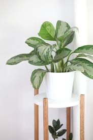 decoration ideas gorgeous image of white potted mid century plant