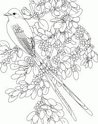 coloring book pages flowers free download