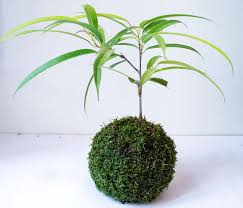 Low Light House Plant Indoor Trees With Low Light Requirements Indoor Plants Expert