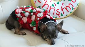 diy sweater for dogs uglysweaterchallenge