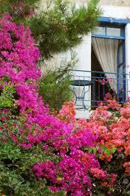 balcony summer flower stock photos royalty free balcony summer
