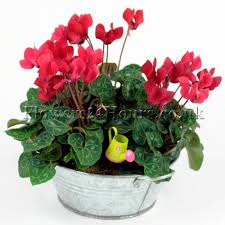 mothers day plants s day gift ideas flowers flowers tips and advice