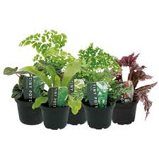 indoor plants nz assets mitre10 co nz sys master productimages h85
