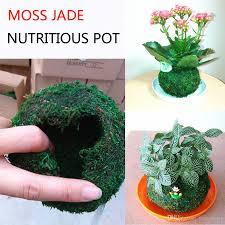 2017 nutrition creative flowerpot moss jade jade japanese moss
