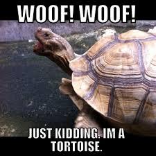 Tortoise Meme - tortoise meme 1 jpg