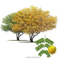 Fall Garden Plants Texas - fall gardening in southeast texas cestrum orange peel great shrub