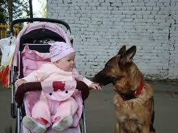 belgian shepherd us army belgian malinois dog and children and family u2013 puremalinois