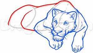 Couch Drawing Step By Step How To Draw A Lioness Step By Step Safari Animals Animals Free