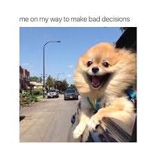 Frowning Dog Meme - 25 best dog memes images on pinterest dog memes funny pics and