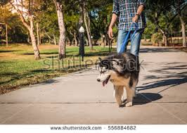 Blind Dog And His Guide Dog Blind Person Dog Stock Images Royalty Free Images U0026 Vectors