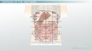 the 4 abdominal quadrants regions u0026 organs video u0026 lesson