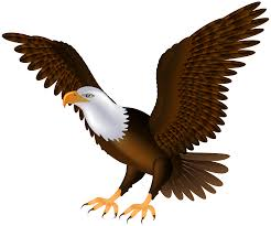 steller u0027s sea eagle clipart transparent pencil and in color