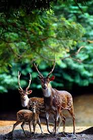 25 best deer images on nature amazing photography and