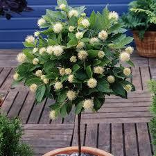 Flowering Patio Plants 49 Best Plants Images On Pinterest Garden Ideas Astilbe