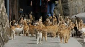 cat island there s an island in japan where cats outnumber people 6 to 1