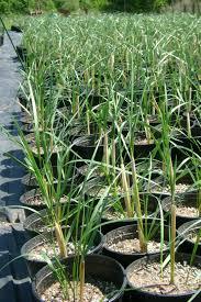 native plant centre prince albert ii of monaco foundation increased knowledge of