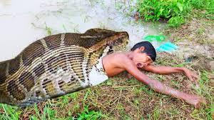amazing deephole catch a lot of snakes primitive snake trap