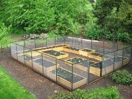 Raised Gardens Ideas Raised Garden Bed Layout Ideas 4 X Raised Beds Raised Garden Bed