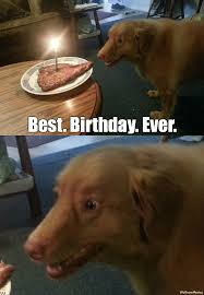 Birthday Dog Meme - dog has best birthday ever weknowmemes