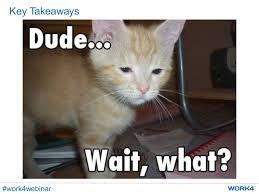 Success Cat Meme - mobile recruiting success