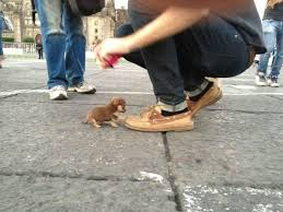 20 dogs so tiny these pictures look fake