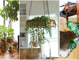 large house plants near me best 25 indoor palms ideas on pinterest