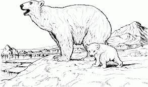 grizzly bears coloring pages alaskan bear face animal