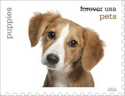 u s postal service unveils new pets forever postage sts