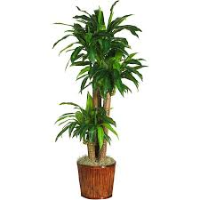 silk plants corn stalk dracaena 62 inch real touch silk plant free