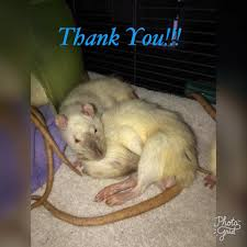 Rodent Meme - from all of us at best friend rodent best friend rodent rescue