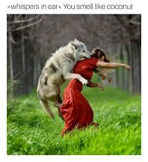 Wolf Meme - the best wolf memes memedroid
