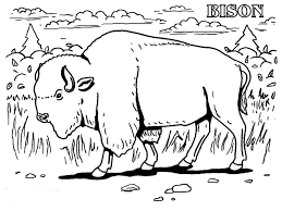 realistic american bison coloring page for coloring page eson me