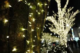 christmas tree flower lights wallpaper japan night branch christmas tree holiday christmas
