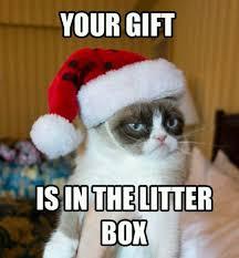 Meme Gifts - 80 best grumpy cat lover images on pinterest grumpy cat cat